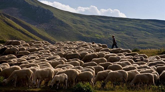 κτηνοτρόφοι