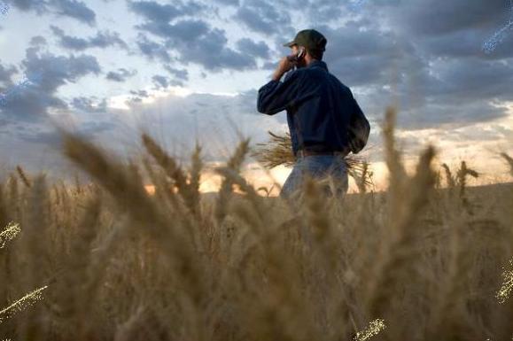 Αναγκαιότητα η αναβάθμιση της γεωργικής έρευνας