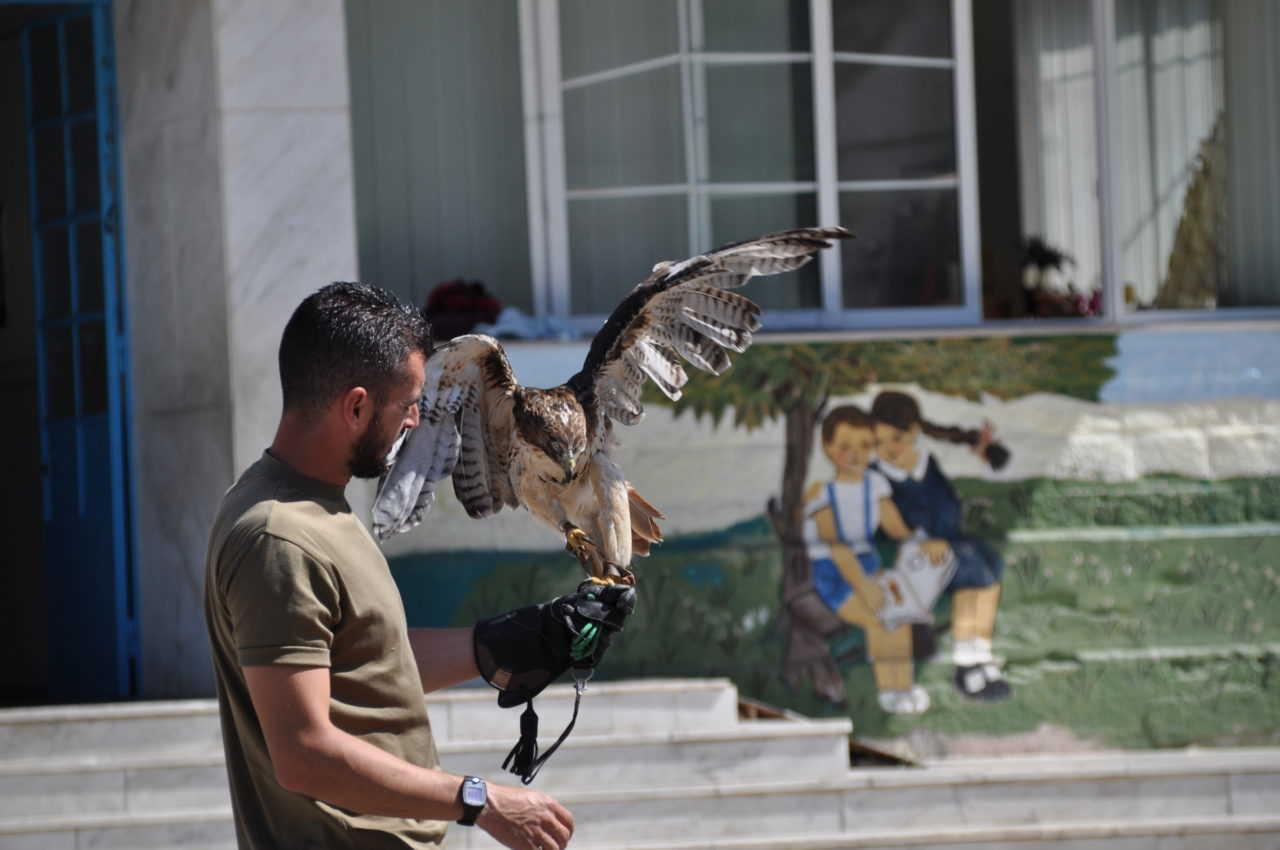 μεγάλο πουλί επίδειξη